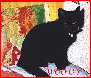 Woody foto